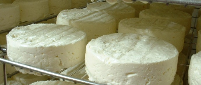 Fromages en blanc sur claies ( Fromagerie Gaugry)